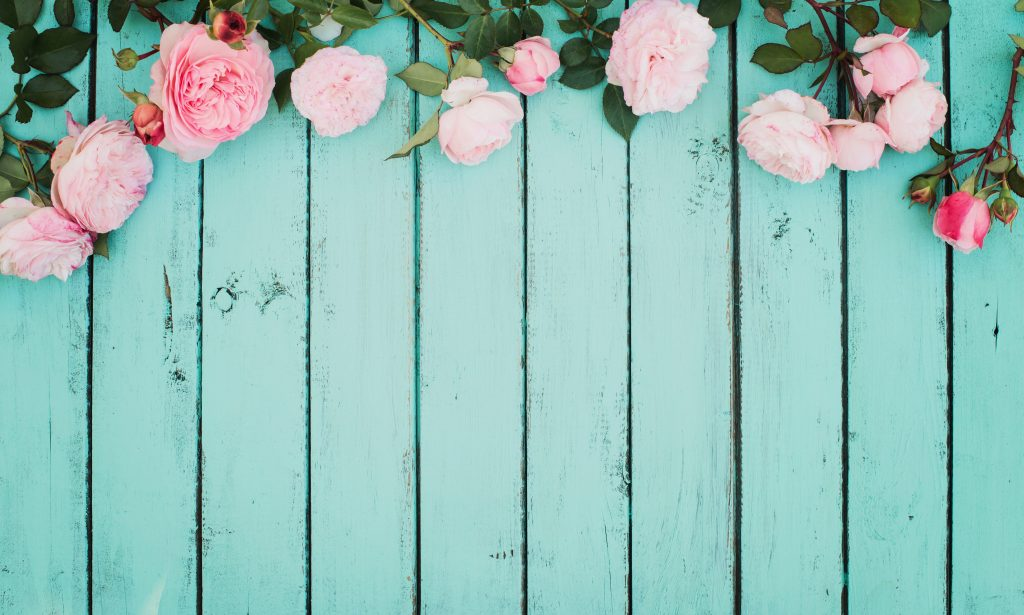 Pink roses on painted wood